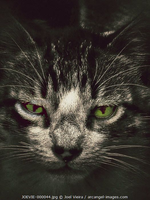 www.arcangel.com - cat-with-green-eyes