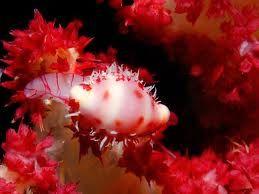 sea snails pictures - Google meklēšana