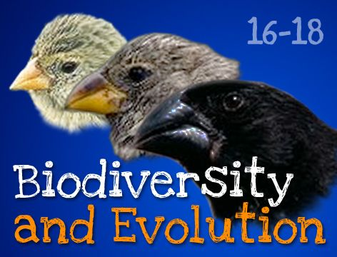 evolution and biodiversity Biodiversity has a key role in maintaining healthy ecosystems and thereby sustaining ecosystem services to the ever-growing human population to get an idea of the range of ecosystem services that we use daily, think of how much energy and time it would cost to make mars (or some other earth-like.