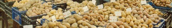 quelques recettes ardéchoises : les longuets de saint félicien, la bombine, le ragout de trifolas,  la mique, les caillettes de pomme de terre, la crique