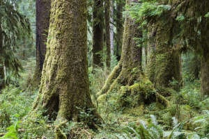Washington rainforest - yes right here in the United States