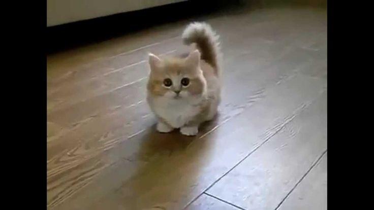 Самые смешные коты. Приколы с котами. Funny cats.
