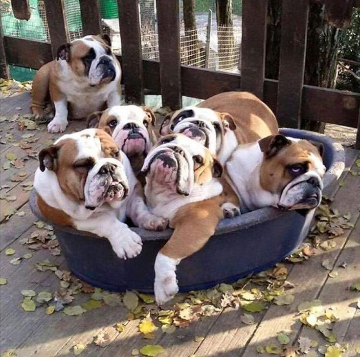 Magnificent Car Alarm Installation Wiring Diagram Thick Guitar 3 Way Switch Square 2 Wire Car Alarm Ibanez Dimarzio Old Tele 3 Way Switch WhiteAdding An Electrical Circuit 3119 Best Bulldogs Images On Pinterest   French Bulldog, Cubs And ..