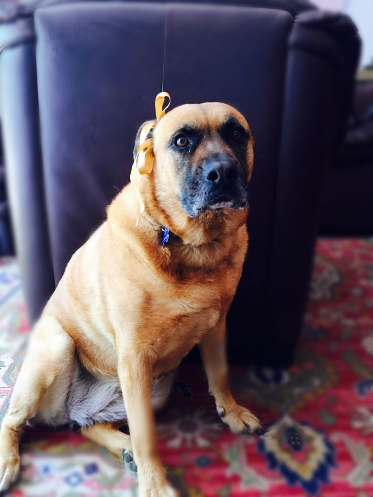 Sara sweet dog animal