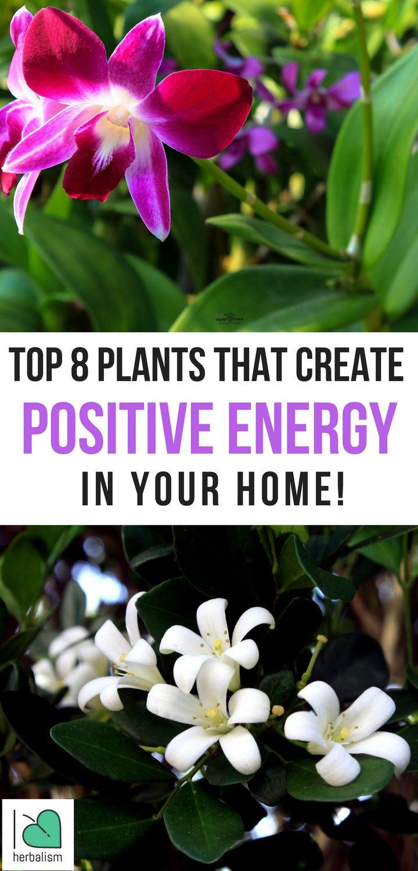 Best 25 Creating Positive Energy Ideas On Pinterest Do
