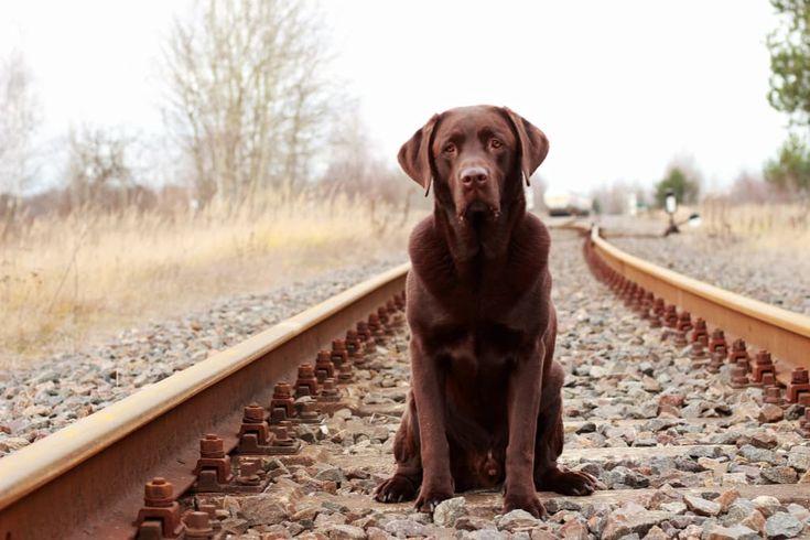 Hunde Foto: Anne und Carlos - Abfahrt !😂🐾 Hier Dein Bild hochladen: http://ichliebehunde.com/hund-des-tages  #hund #hunde #hundebild #hundebilder #dog #dogs #dogfun  #dogpic #dogpictures