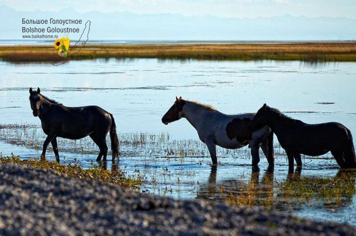 Кони на озере / Бродят кони