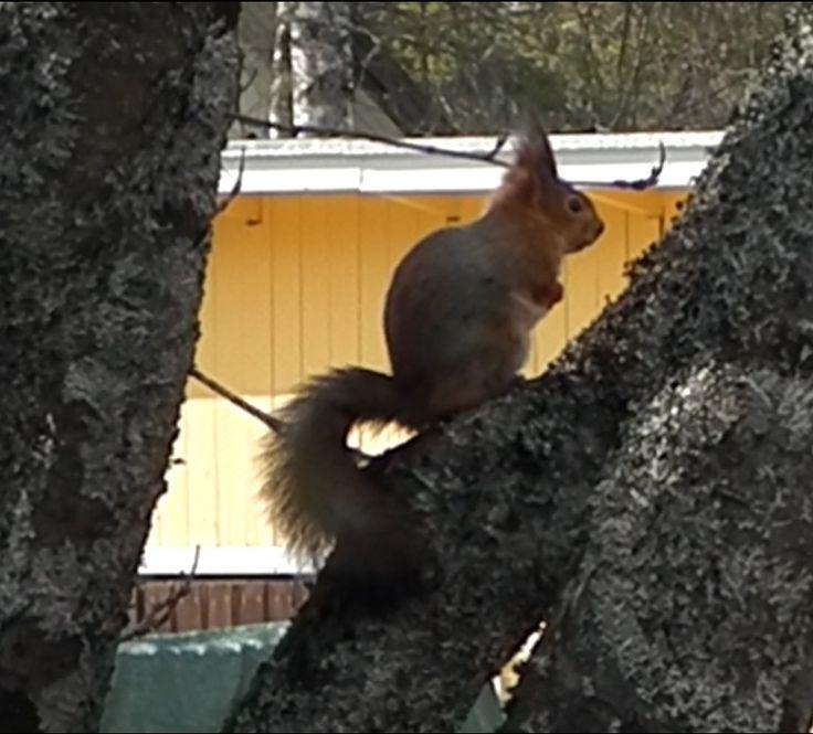 Orava. Kuva 3. 13.04.2015.