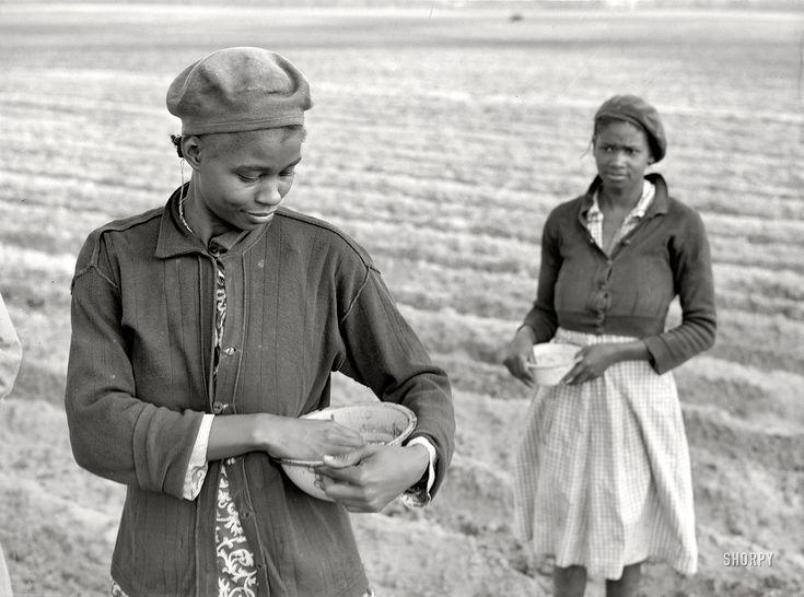 "March 1941. ""Planting corn on a plantation near Moncks Corner, South Carolina."" Medium-format negative by Jack Delano for the FSA. View full size."