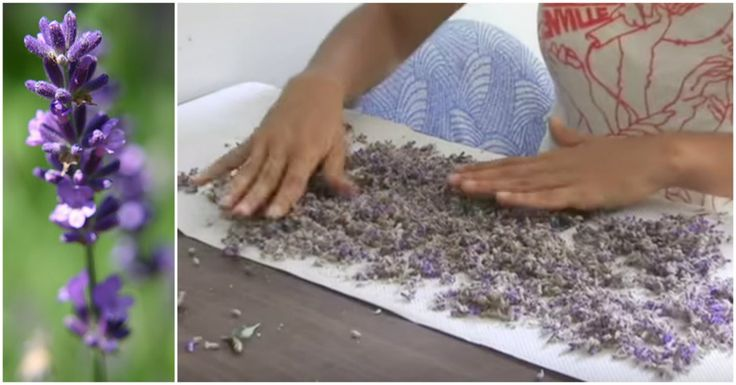 Lavender Essential Oil Can Have An Amazing Effect On Your Health