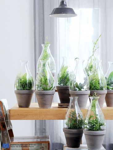 Ferns. This is such a wonderful idea. Where did they get all those replacement glass to the oil lamp?