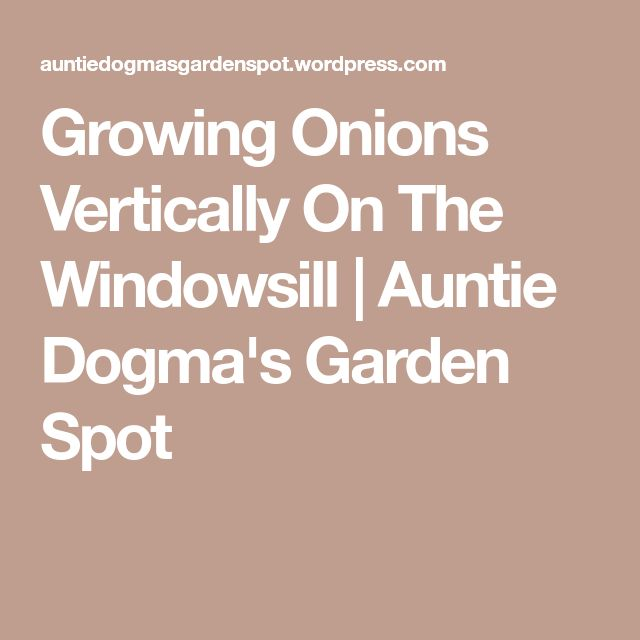 Growing Onions Vertically On The Windowsill | Auntie Dogma's Garden Spot