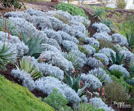 Avoid landscaping hard-to-mow locations with turf grass. If the grass is neglected and grows too long, it will become a fire hazard. Instead, plant low-maintenance groundcovers. On this steep slope, the turf was replaced with a mass of gray Santolina punctuated by colorful agave. The Santolina and agave require little care and are both fire-resistant.