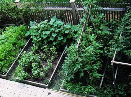 25+ unique Small vegetable garden layout ideas ideas on Pinterest