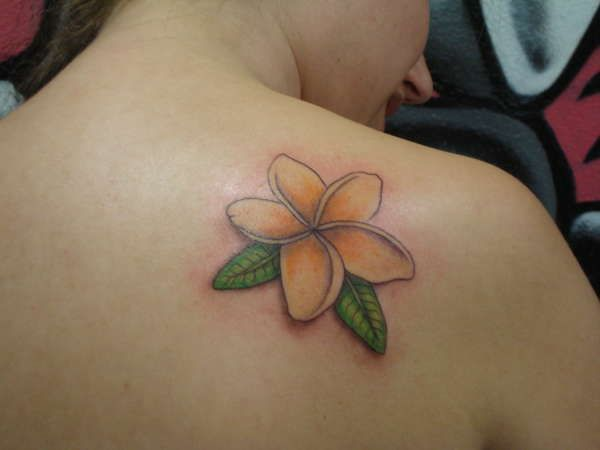 108 best frangipani tattoo s images on pinterest tattoo ideas rh pinterest com frangipani tattoo images frangipani tattoo bedeutung