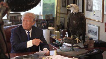 Uma águia se recusou a tirar fotos com Donald Trump e bicou o canditato republicano