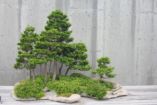 25 Best Ideas About Bonsai Forest On Pinterest Japanese