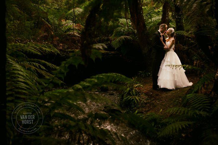 Lyrebird Falls Wedding-1038.jpg