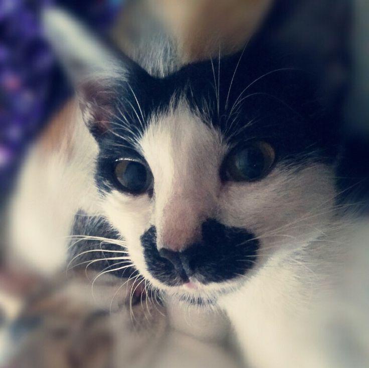 #meong #cute #cat #black #white