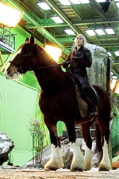 """leepace: """" """"The horse Lee rode in The Hobbit, Moose (the one they CGI'd into his elk), WAS 18 HANDS HIGH. For those of you who don't speak horse, that means his horse was 6ft tall to his withers which..."""