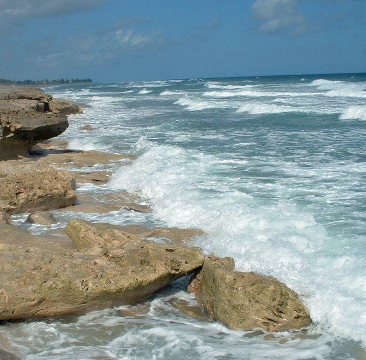 Hobe Sound Florida Beaches   ... the most unique beach in Florida. Blowing Rocks Beach in Hobe Sound