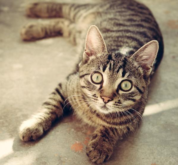 Cómo ahuyentar a un gato callejero