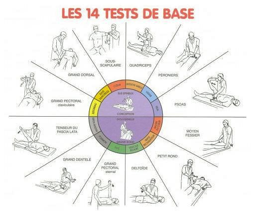 kinésiologie tests de base