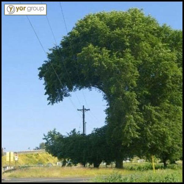 Allah (c.c) isterse olur! Bulunduğu ortama göre şekil alan mucizevi ağaç! #ilginçfotoğraflar #mucize #muhteşem #doğa #yeşillik #ağaç #YörGroup #YörYapı