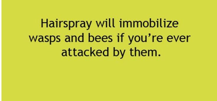 how to kill bees and wasps