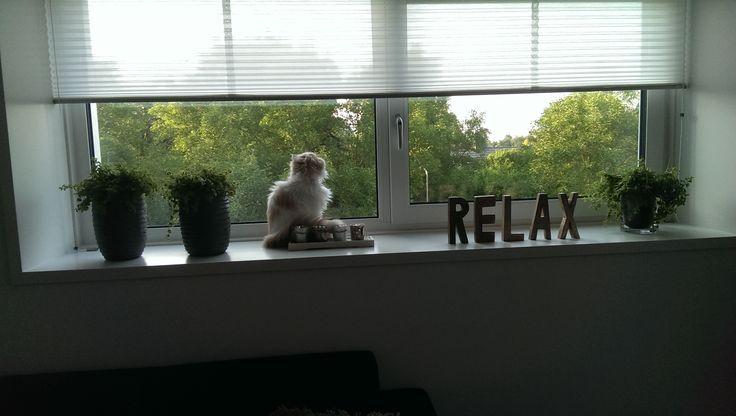 Eef op haar favoriete plekje #cats