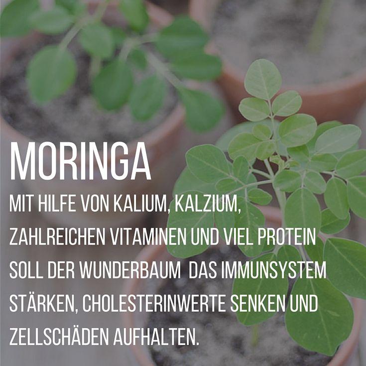 Um das Wunderbäumchen Moringa ranken sich einige Mythen. Wir sagen euch was stimmt, was nicht.