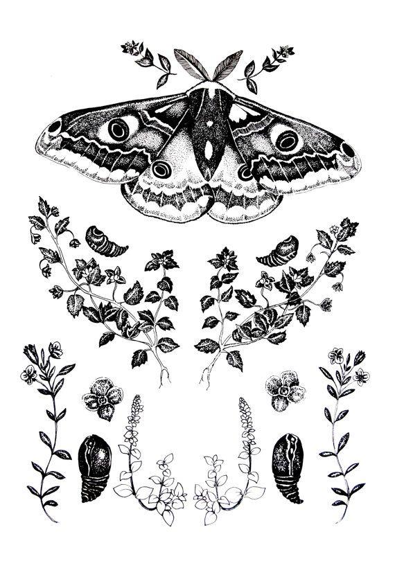 Emperor Moth & Gypsy Weed Print.                                                                                                                                                      More