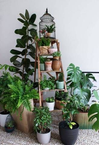 Stack your plants on an old ladder.