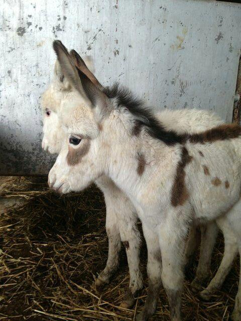 ctsuddeth.com: Donkeys