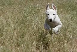 Teach Your Dog To Come When Called Every Time! : Dog Obedience Training Blog