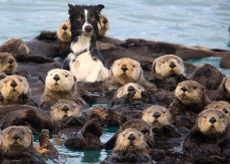 Want to see a bewildered dog surrounded by otters? Of course you do.