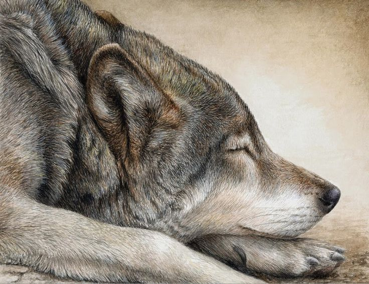 Pat Erickson ~ Figurative / Wildlife painter [Part 2] | Tutt'Art@ | Pittura * Scultura * Poesia * Musica |