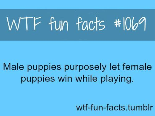 Interesting 'WTF' Facts : theCHIVE