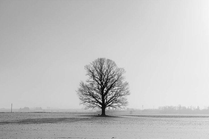 """Somewhere between Warsaw and Riga"" series  Bus trip Poland - Latvia 2017 Jordi NN . . . #Poland #lithuania #latvia #bustrip #busview #landscape #blackandwhite #bnw #blackandwhitephotography #photography #minimalism #monochrome #2017 #JordiNN"