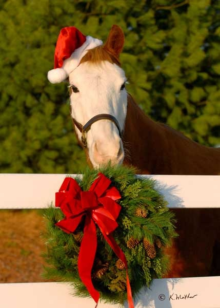 Merry christmas horse pictures