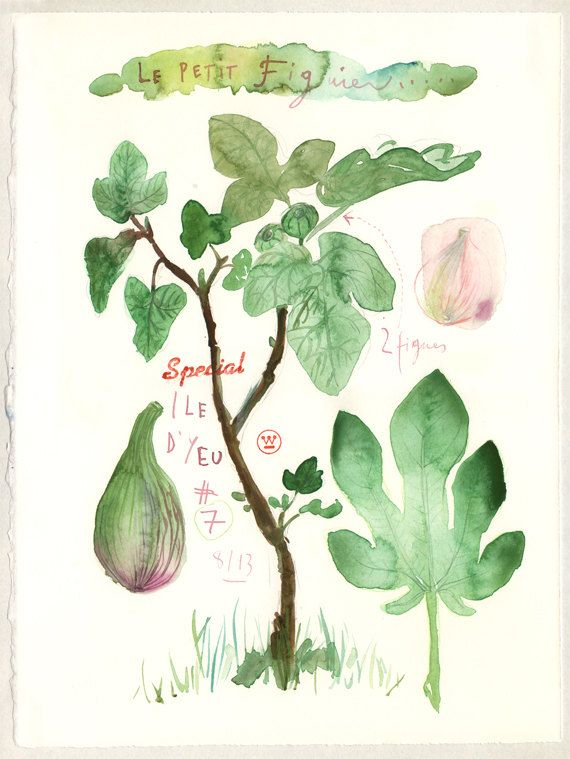 The fig tree Original watercolor painting