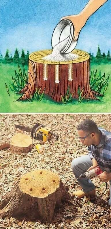 How to get rid of a stump. Drill holes and add 100% Epson Salt then add water.  Allow it to naturally decay. (Live trees may take longer)