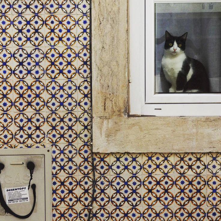#azulejo #azulejos #tile #tiles #glazedtiles #design #pattern #patterns #patternedtiles #urban #art #urbanart #azulejoportugues #azulejospadrao #amantedelosazulejos #azulejosdeportugal #azulejocollector #portugaldenorteasul #wanderlust #igersportugal #travel #lisboa #portugal #streetphotography #gerador #architecture #p3top #vintage #minimal