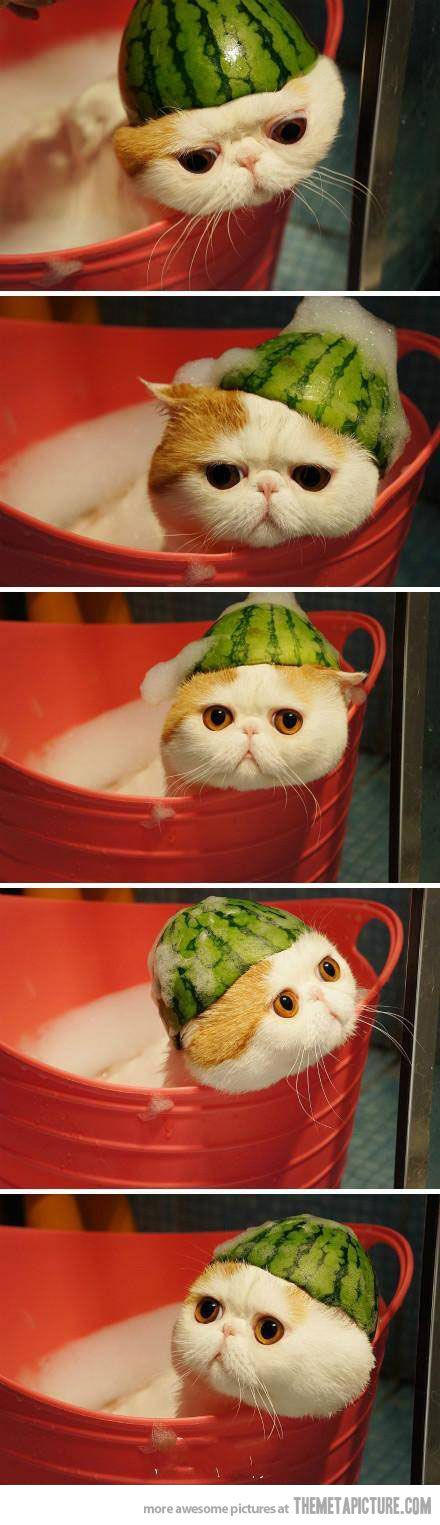 I've decided I need one of these cats. I hope the watermelon hat is included.