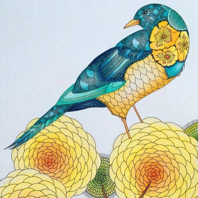 17 Best Images About Animal Kingdom Coloring Book On Pinterest