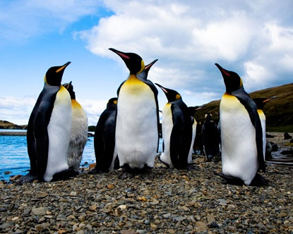 Falkland Islands...someday very soon.