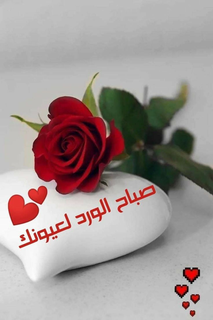 Pin By Gihan Aly On Gigi Good Morning Flowers Good Morning Greetings Good Morning Arabic