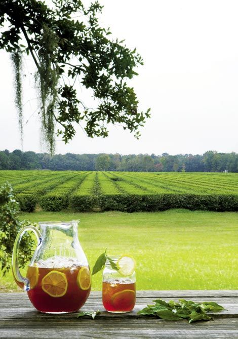 Charleston Tea Plantation is the home of American Classic Tea.  It is located on picturesque Wadmalaw Island in the heart of South Carolina's Lowcountry. The grounds include 127 acres of Camellia Sinensis tea plants, a working tea factory and a plantation gift shop. Also available to guests is an educational trolley tour that explores the scenic grounds that produce American Classic Tea.  #South #Southern
