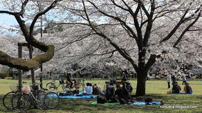 Rurousha 流浪者: Sakura 2013: Koganei Park