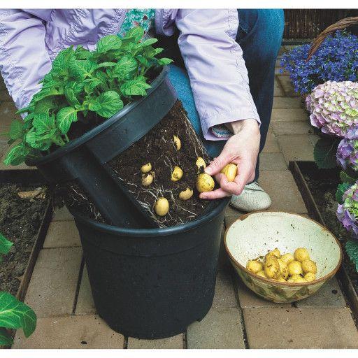 Kaufen Sie Potato Pot bei S & S Worldwide